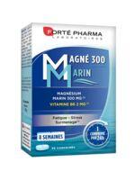 Magné 300 Marin (2 mois) à CUISERY